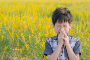 Indoor air quality Olathe allergy season